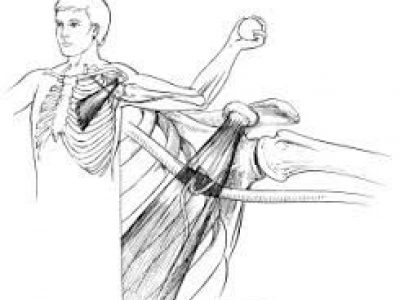 Enhance Palpation through Cadaver Study - Upper Body